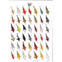 Koi Poster 70x100cm no.2